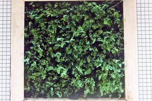大学構内で実験中の新しい壁面緑化システムは在来植物種のみでできている。